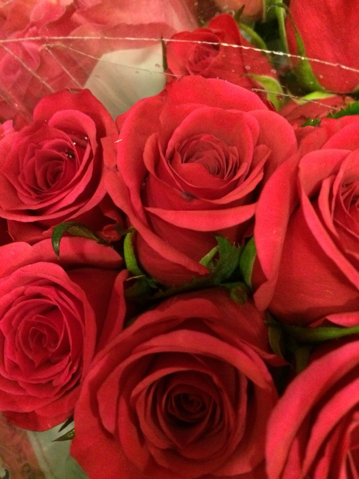 Nice roses in supermarket