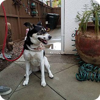 Hawthorne, CA - Border Collie Mix. Meet Katara, a dog for adoption. http://www.adoptapet.com/pet/17111814-hawthorne-california-border-collie-mix