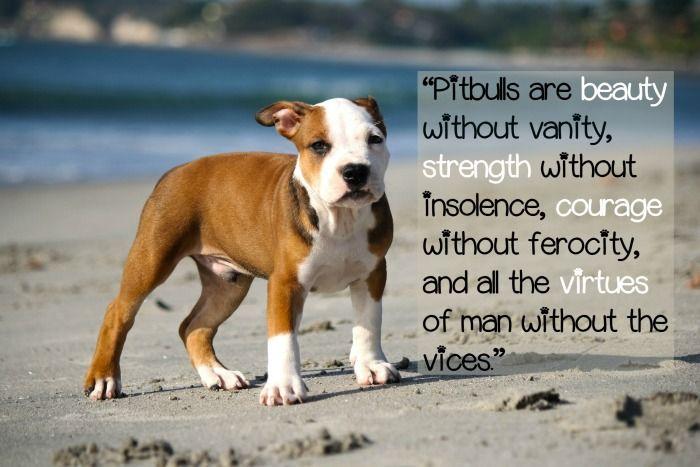 Pitbull Puppy Love: Quotes About Pitbulls