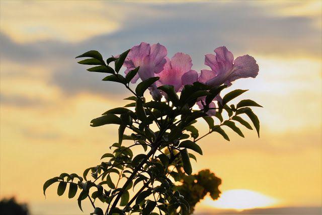 M  o   m   e   n   t   s   b   o   o   k   .   c   o   m: Pink flowers