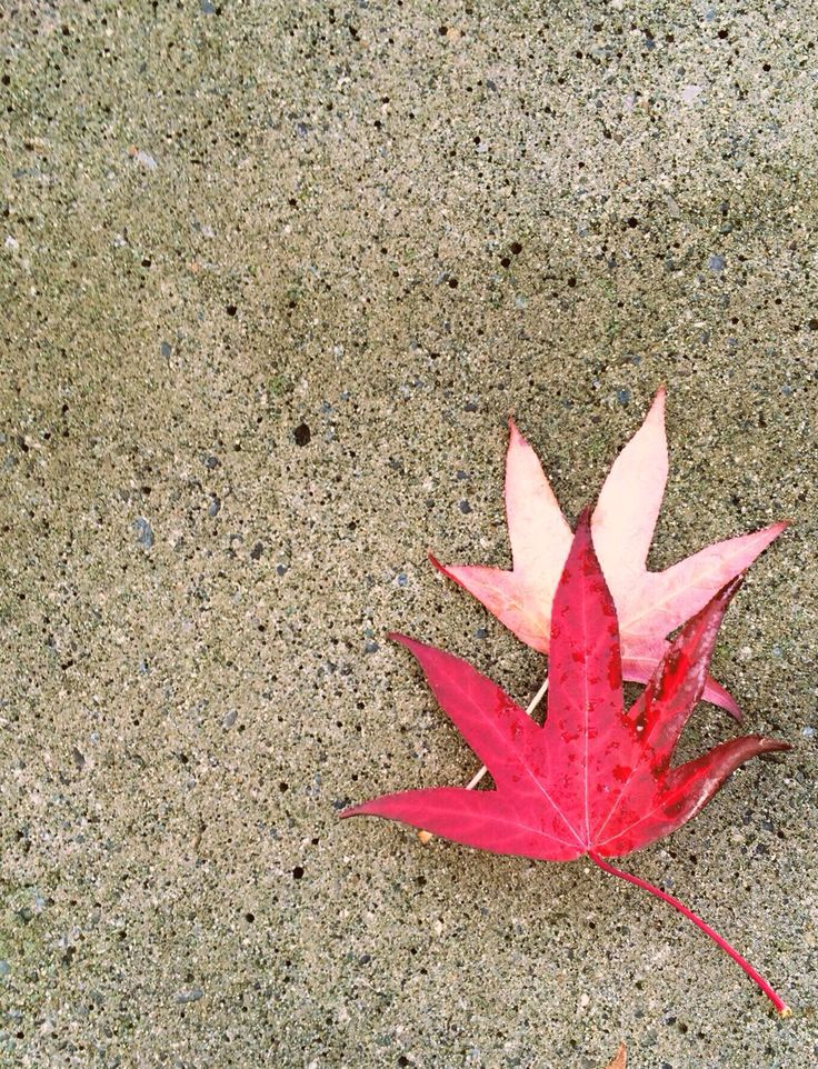 Vancouver Fall 2015