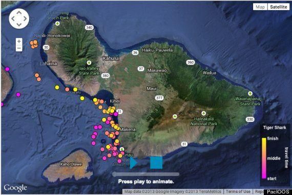 New Website Lets You Track Sharks Around Maui