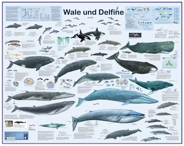 The 187 best Animals / Tiere (Poster & Lerntafeln) images on ...