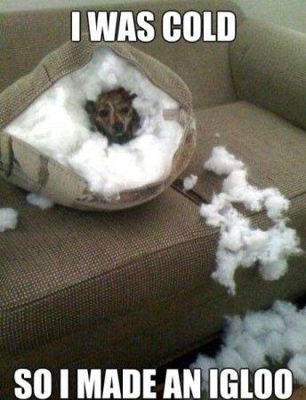 igloo dog