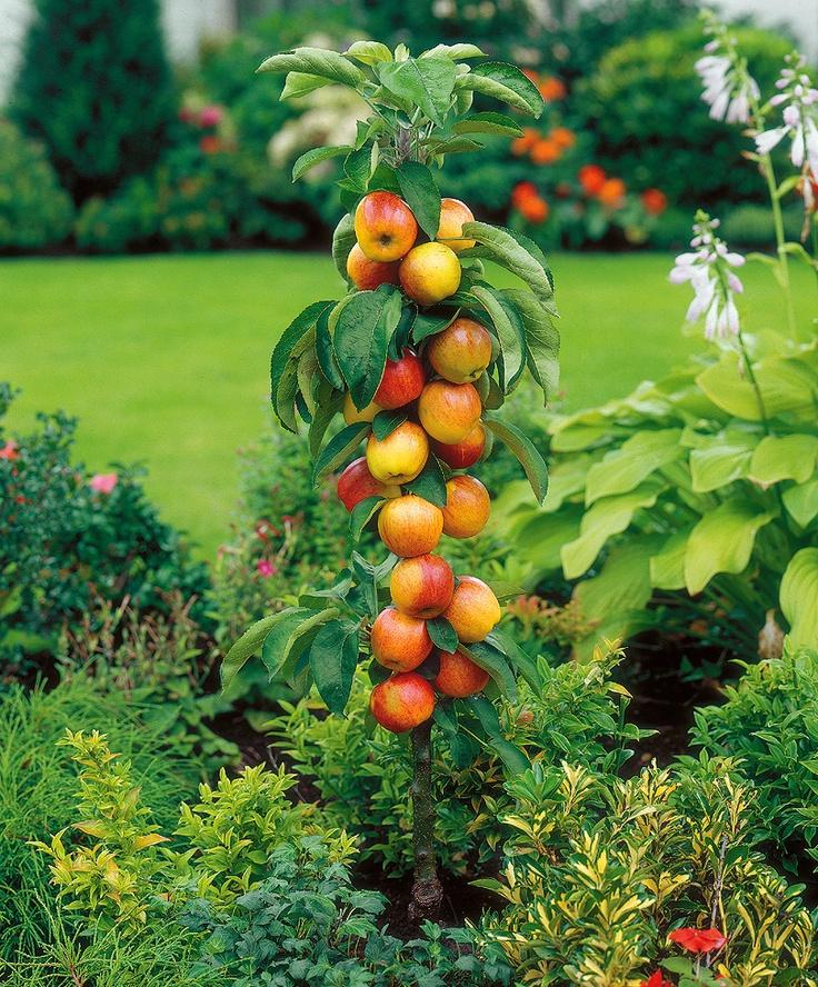 30 best Apple Trees images on Pinterest | Apple tree, Apple orchard ...