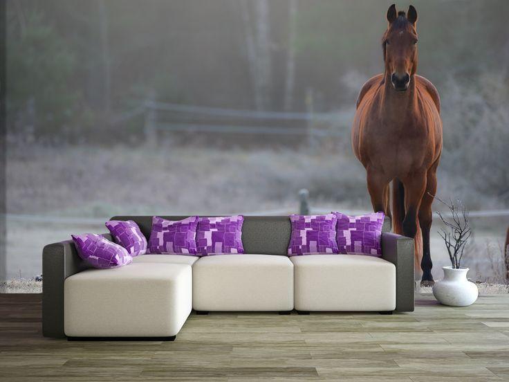 Kto lubi konie ? Dla wszystkich miłośników koni, mamy dzisiaj fantastyczną propozycję. Fototapeta z tym pięknym zwierzęciem. #homedecor #fototapeta #3d #aranżacjawnętrz #wystrójwnętrz #decor #desing http://www.fototapeta24.pl/getMediaData.php?id=96131312