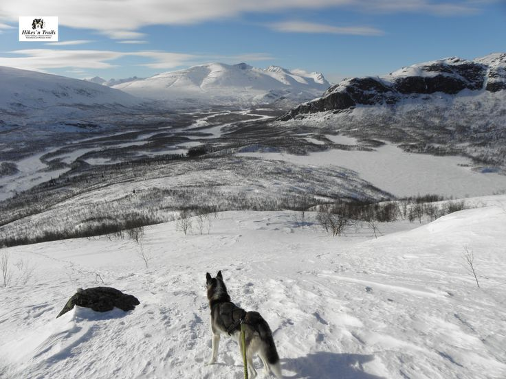 Skiing trip to Lapland with my husky. He was also enjoying the views of Rapa Valley and Sarek.