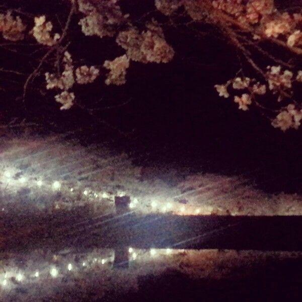 밤 마이산 벚꽃