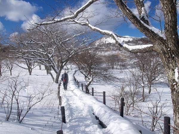 八島ヶ原湿原の南側の木道を進む。霧ヶ峰高原のハイキング|八ヶ岳登山ルートガイド。Japan Alps mountain climbing route guide