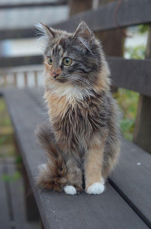Focused feline.