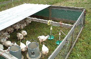 All about range poultry housing, including Salatin's designs - for rearing meat birds