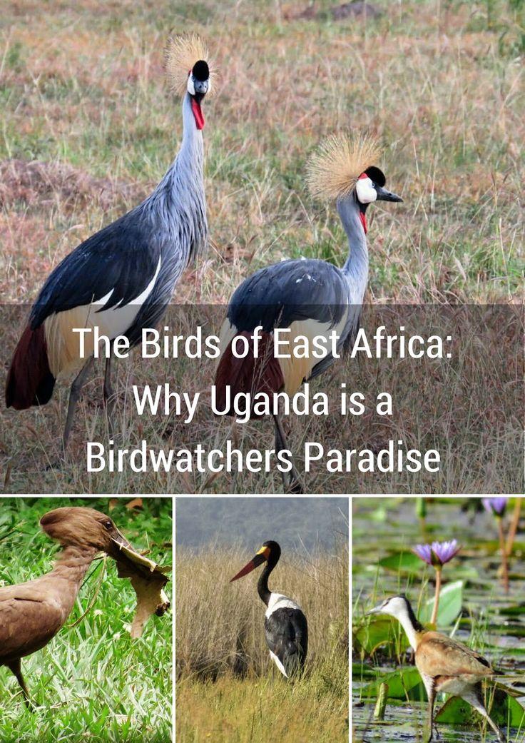 The Birds of East Africa: Why Uganda is a Birdwatchers Paradise | Sidewalk Safari