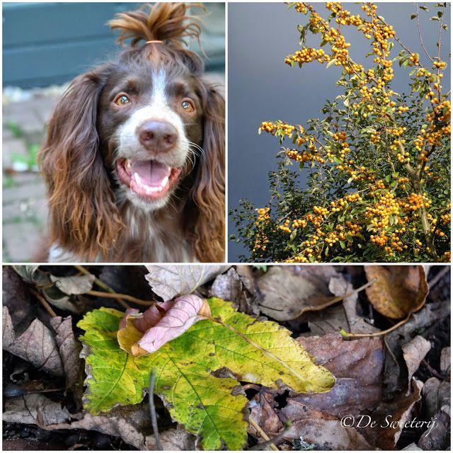 De Swieterij: Happy fall