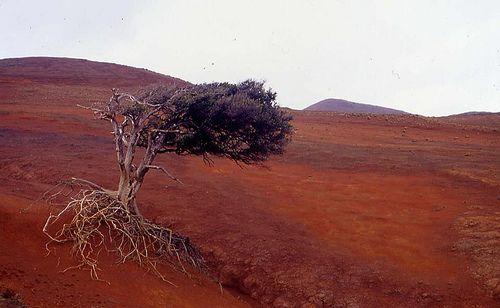 La deforestación en la Isla