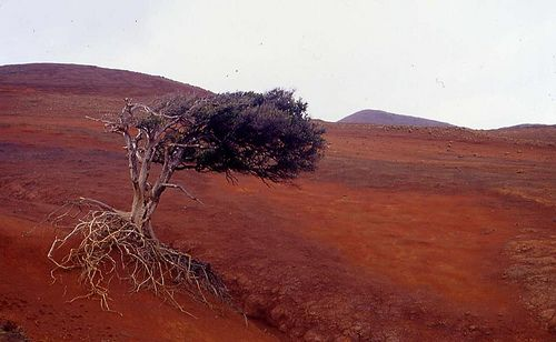 Deforestation in the Juan Fernandez Island