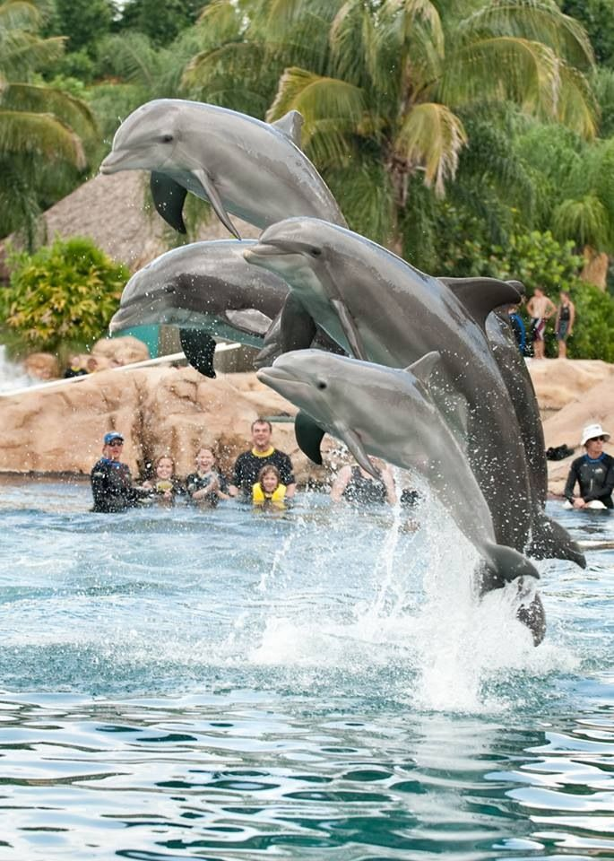 Discovery Cove Orlando Florida! Swimming with the Dolphins