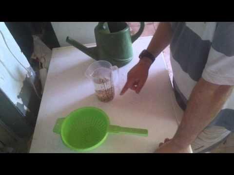 Receta de hormonas de enraizamiento caseras - YouTube