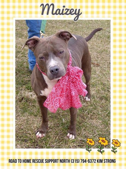 Photo Of Maizey Dog Adoption Home Rescue Pet Adoption