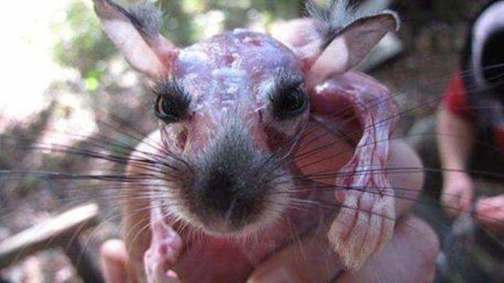 Petition · Ministério Público : Não à extração de peles em animais vivos. · Change.org