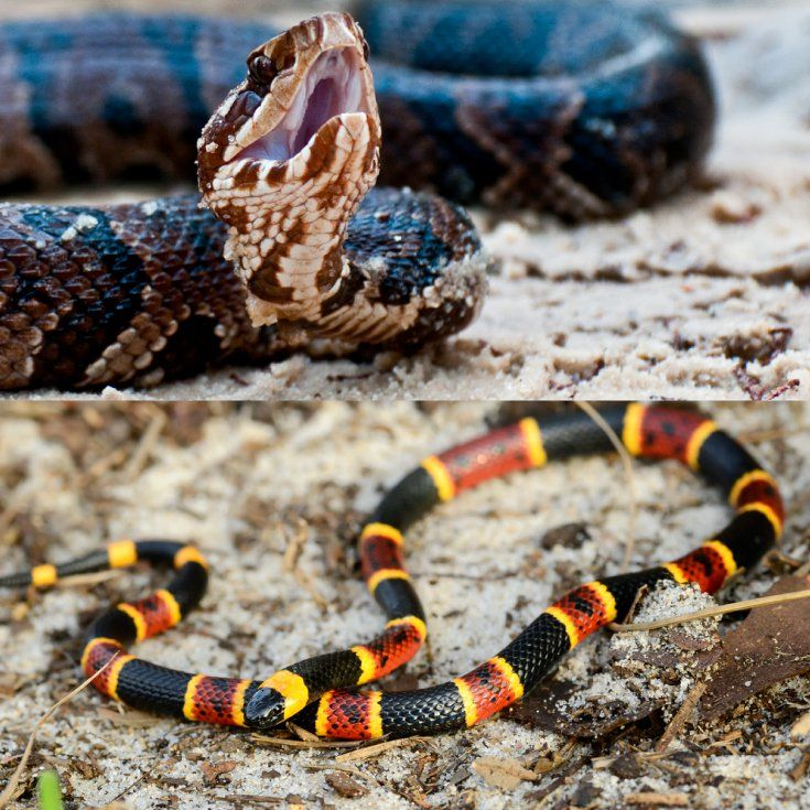 23 Best Snakes In Texas---poison & Non-poison Images On