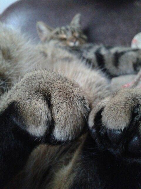 Huge paws