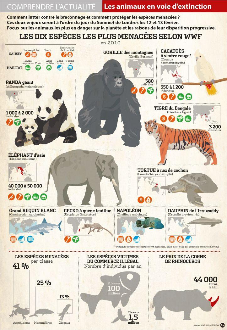 Les animaux en voie de disparition