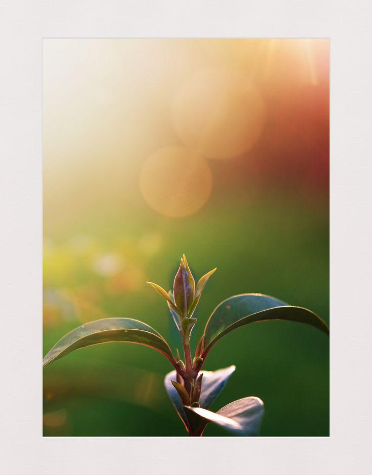 https://flic.kr/p/25a4uq3   Quand les nouvelles feuilles attrapent le soleil !
