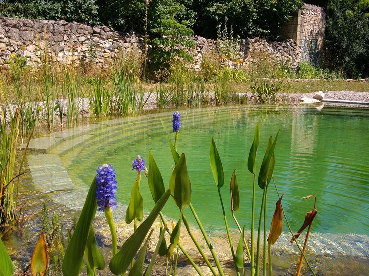 Les 11 meilleures images du tableau nos piscines for Piscine jardin aquatique