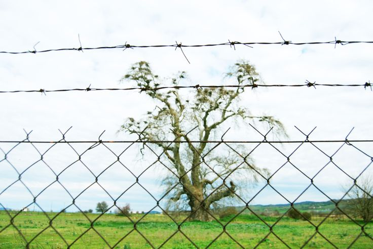 the forbidden tree