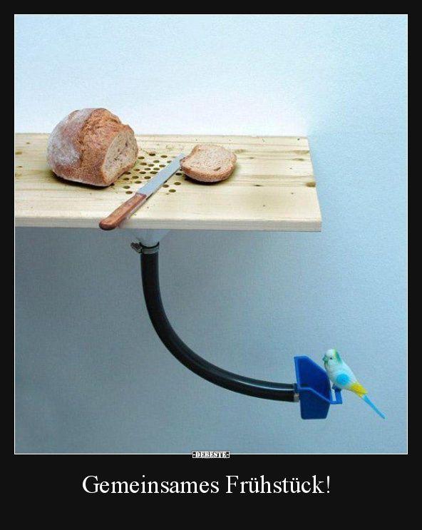 Gemeinsames Frühstück!   Lustige Bilder, Sprüche, Witze, echt lustig