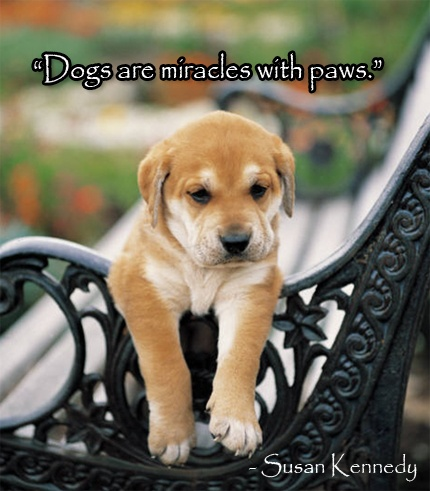 Quotes About Dogs 122 Best Favorite Dog Quotes Images On Pinterest  Dog Quotes Dog .