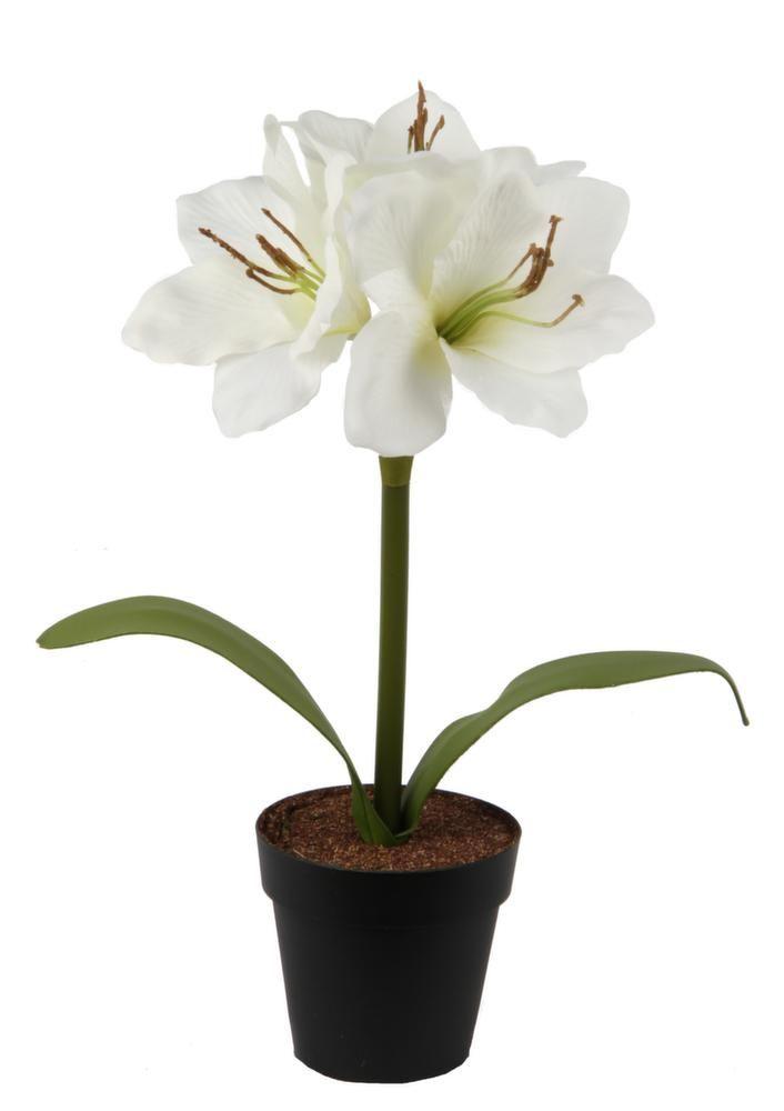 Les 26 meilleures images du tableau plantes artificielles for Amaryllis vente