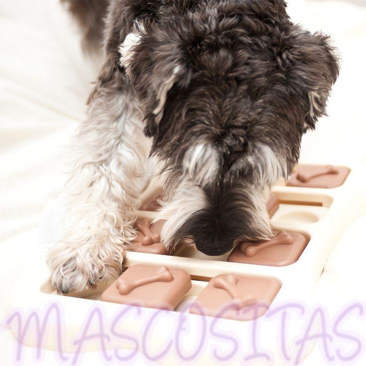 DogBrick tiene el propósito de ocupar a tu perro mentalmente para equilibrar la necesidad de estímulo mental.