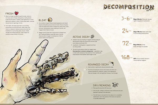 Human Decomposition Infographic on Behance