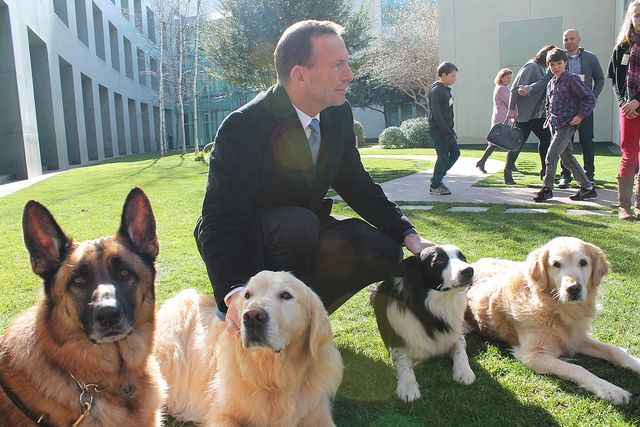 Tony meeting with some Australian search and rescue dogs at Parliament House by Tony Abbott, via Flickr