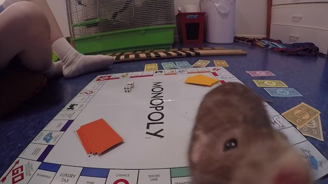 Really Bad Idea: Rat Monopoly | Monopoly, Rats, Bad
