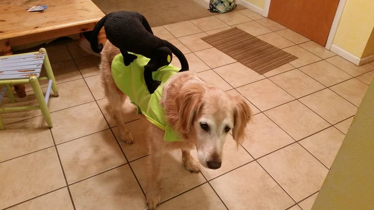 SEO Dog loves Halloween! He's such a good sport!!