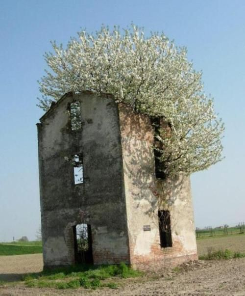 /Old Buildings, Flower Trees, New Life, Mothers Nature, Happy Monday, Happymonday, Trees House,  Megalith Structures, Abandoned House
