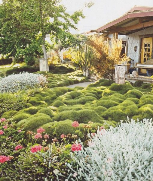 Drought Tolerant Front Yard: 17 Best Images About Ground Cover, Lawn Substitutes And