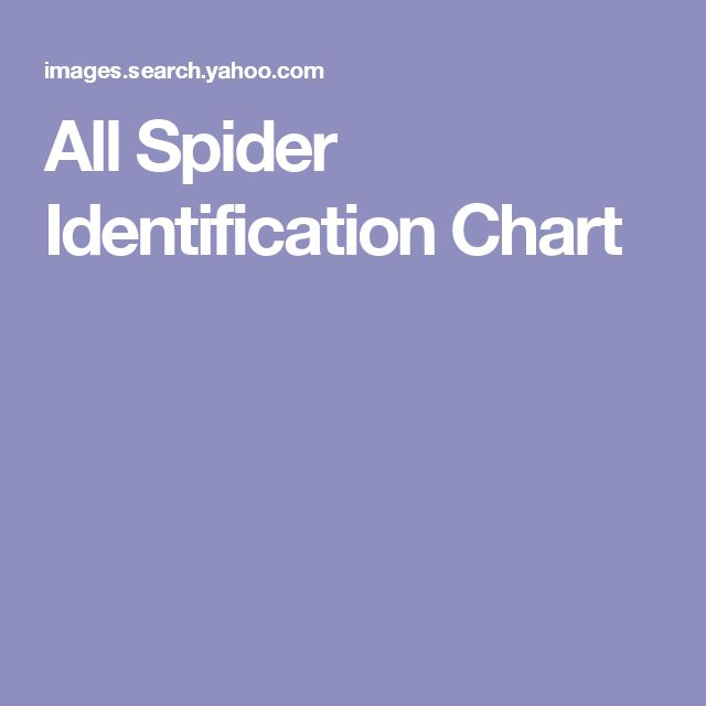All Spider Identification Chart