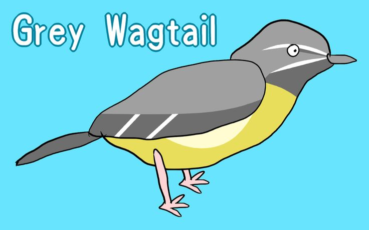 Grey Wagtail / #WUXGA #Animal #Bird #キセキレイ