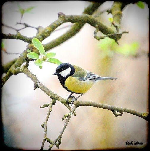 Koolmeesjes bij ons in de tuin  zijn Ons vogelhuisje nader te aan t bekijken. Spannnend wie weet komt er een nestje.