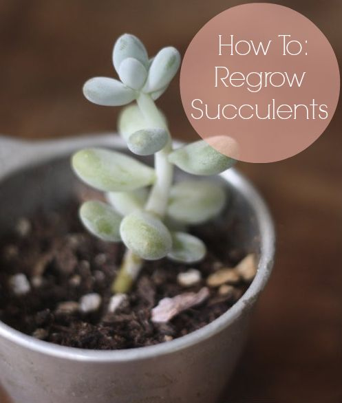 How To: Grow & Propagate Succulents — regrow a new plant from the ones you already have #garden #succulents #plants