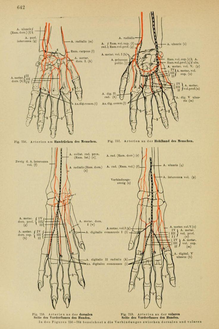 anatomy drawing school human animal comparative anatomy pdf