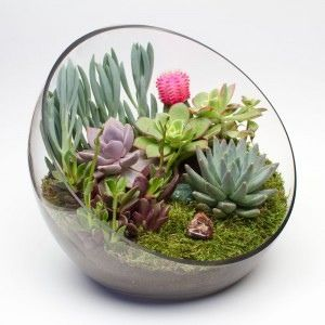 Succulents in 3/4 sphere.