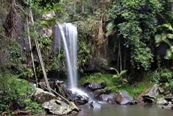 Getaway to Mt Tamborine with bushwalks, cheese, distillery, glow worms, markets 2nd + last Sun, could take Balto and camp at http://www.tamborine.info/site-rates