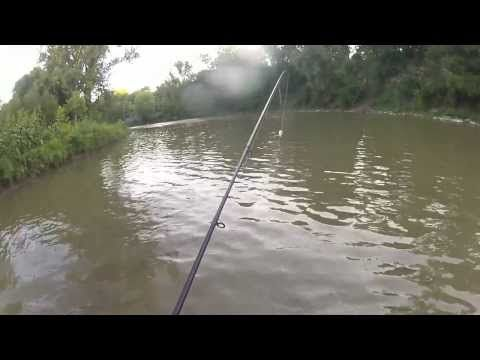 ▶ 2013 Chinook Release on the Centre Pin #getbitnow @Mark Tarnawczyk - YouTube