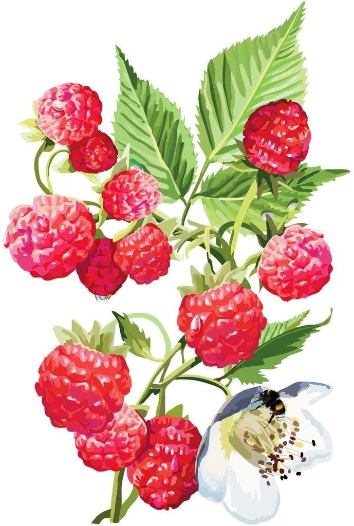 Картинки рисованные для детей ягоды, картинки про отдыхающих