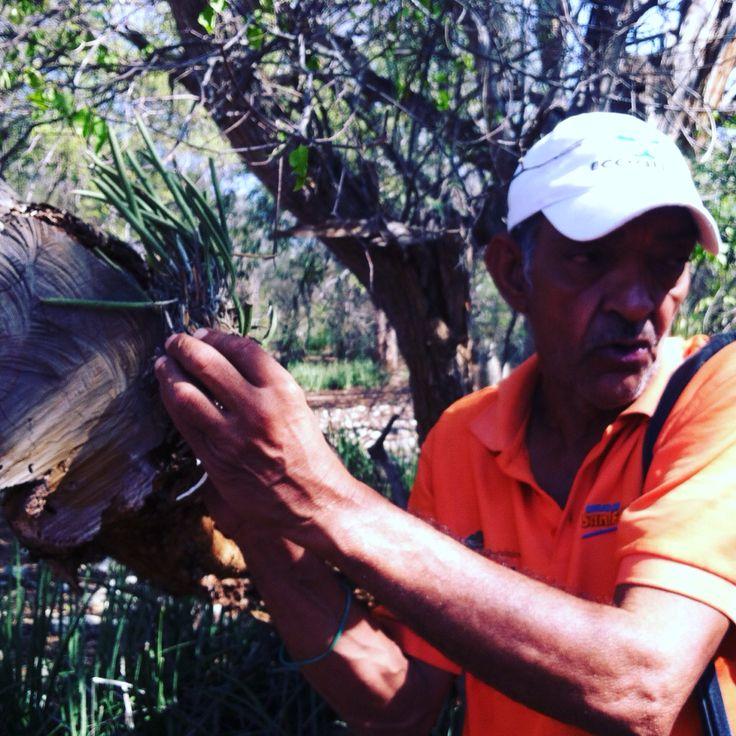 veo_veo, el guia Pedro Rodríguez trabaja los fines de semana, también elabora artesanías en el Jardín Botanico.