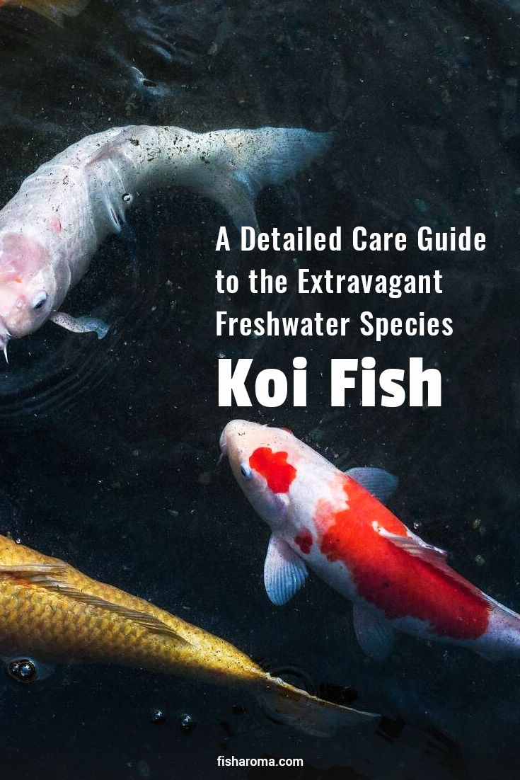 A detailed care guide to the extravagant freshwater